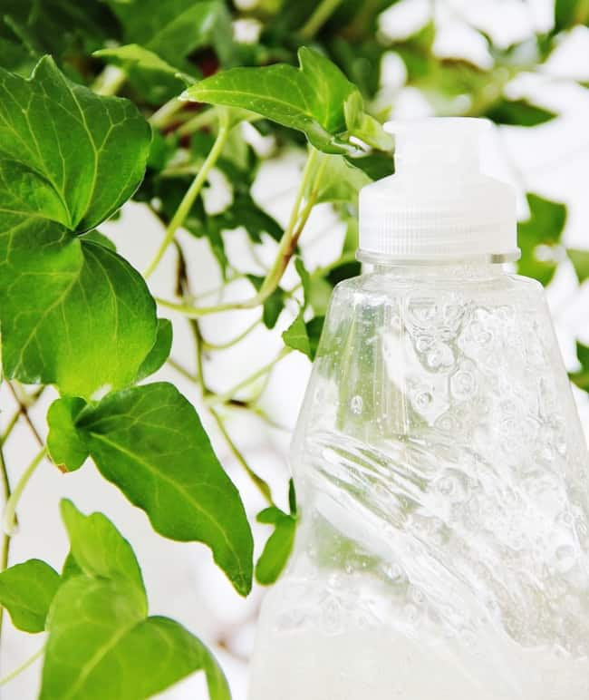 tip to keep your ivy fresh with dishwashing soap