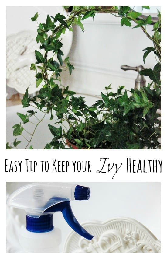 How-to-keep-ypur-ivy-healthy