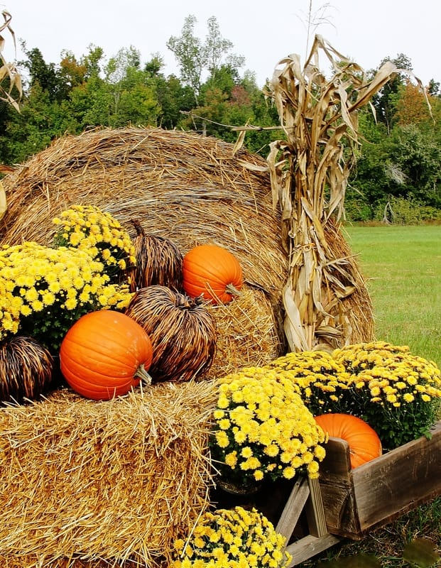 fall-projects-outside-decorating
