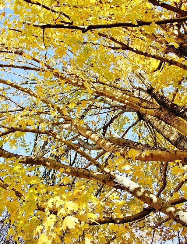 Leaves int he tree