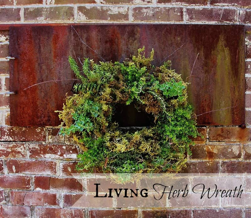 1-Living-Herb-Wreath-project