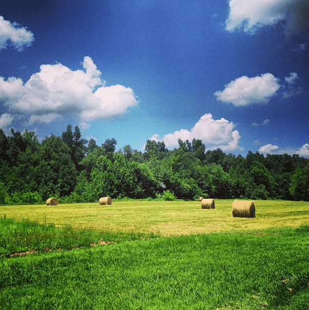 life-in-the-country