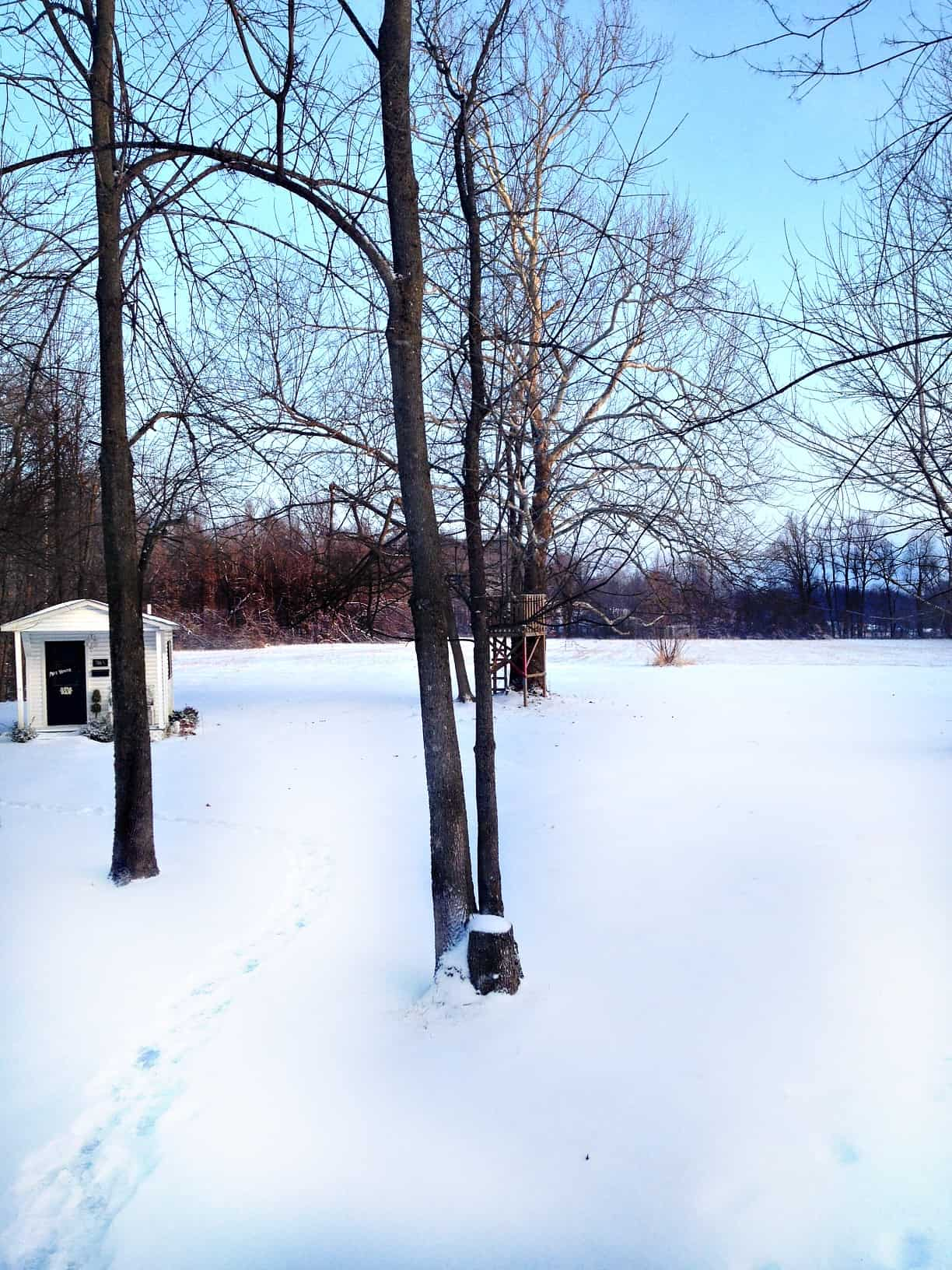 Thistlewood Farms snow-covered backyard with a small white shed and bare trees, with a snowy forest in the background