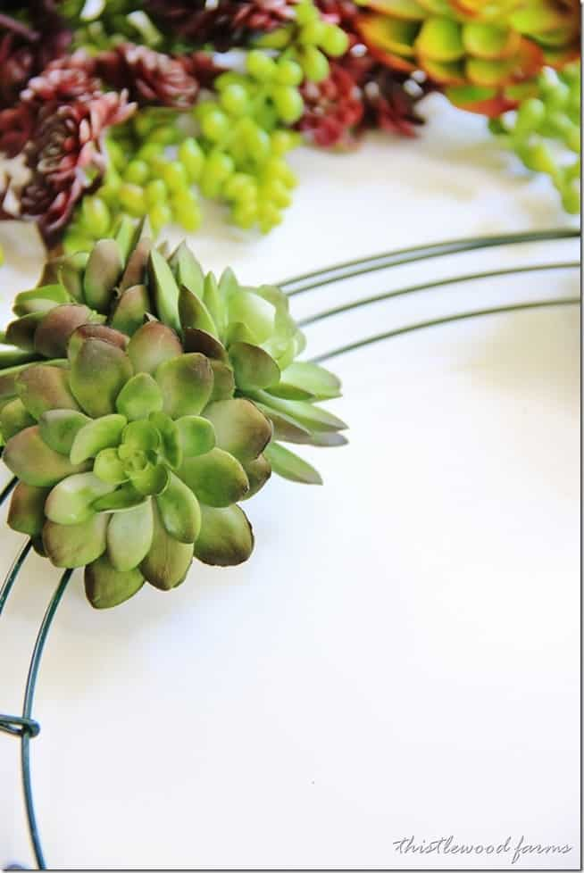 Start with the heaviest succulents first on the wreath