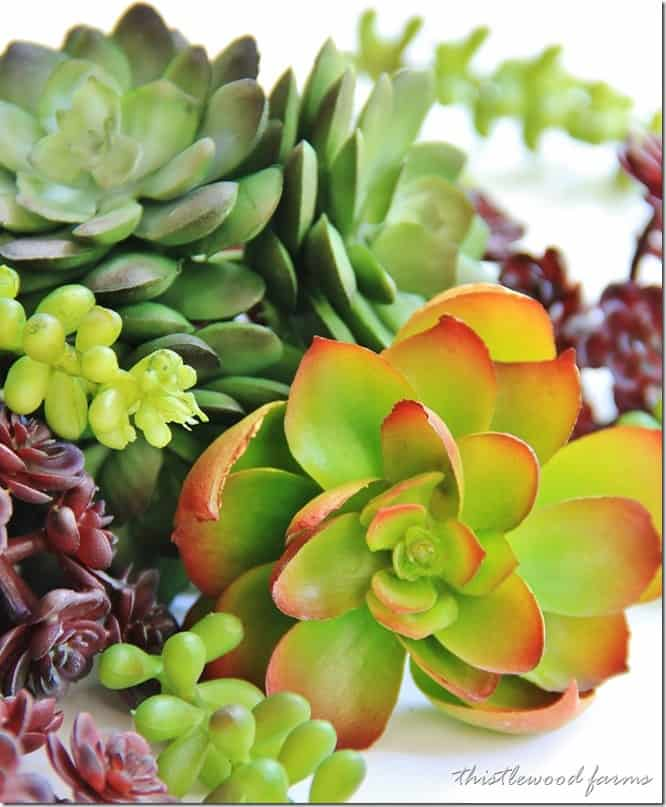 Up close look at the faux succulents