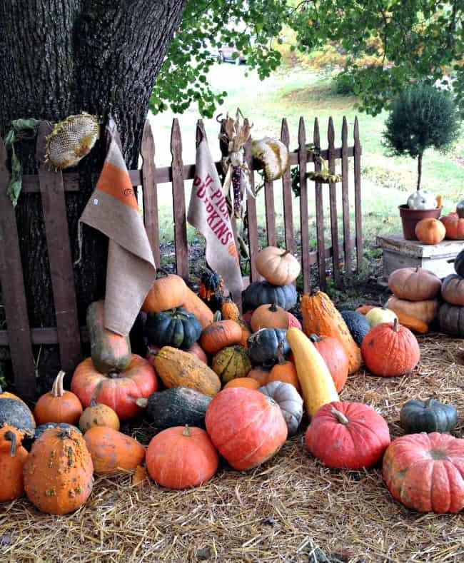 city farmhouse show pumpkins