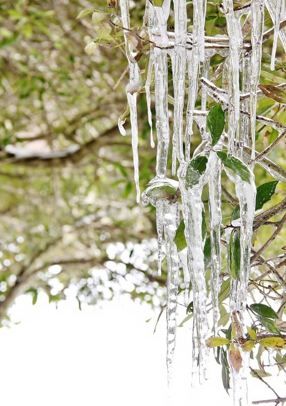 ice-thistlewood