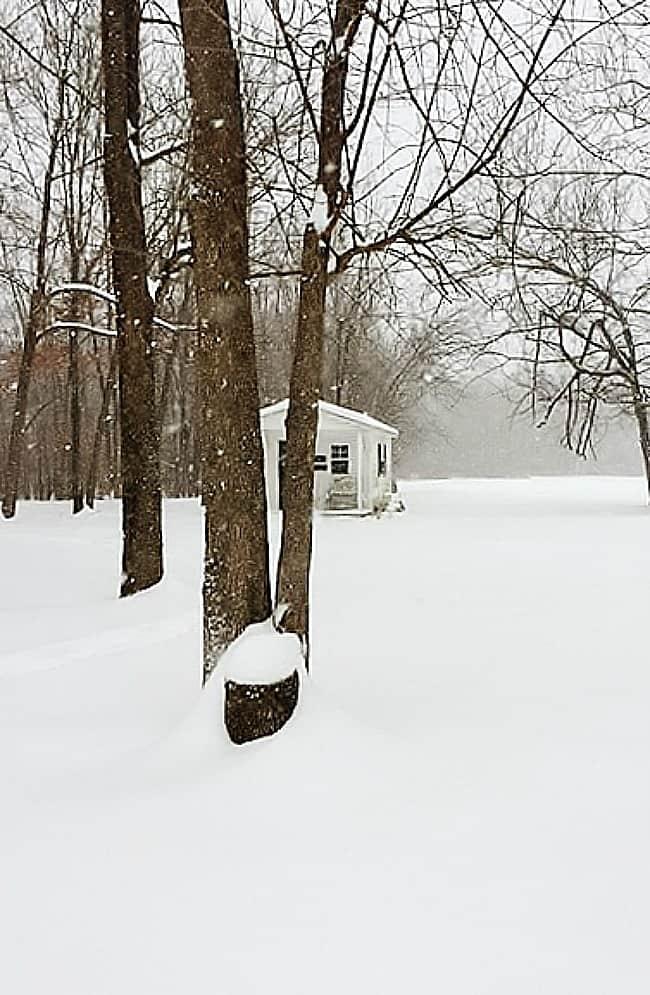 winter wonderland field