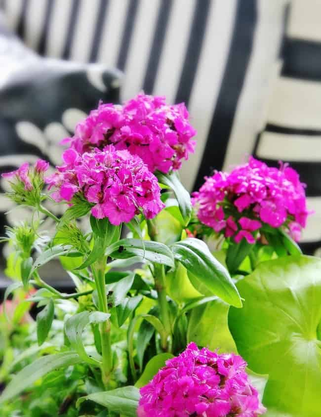 Flowers for container gardens