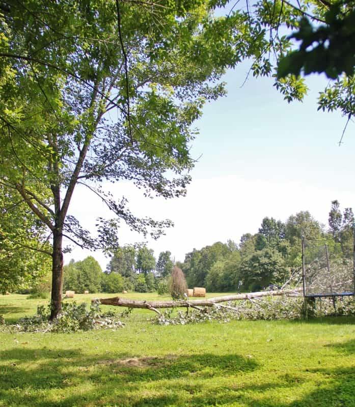 Fallen Tree Thistlewood Farms