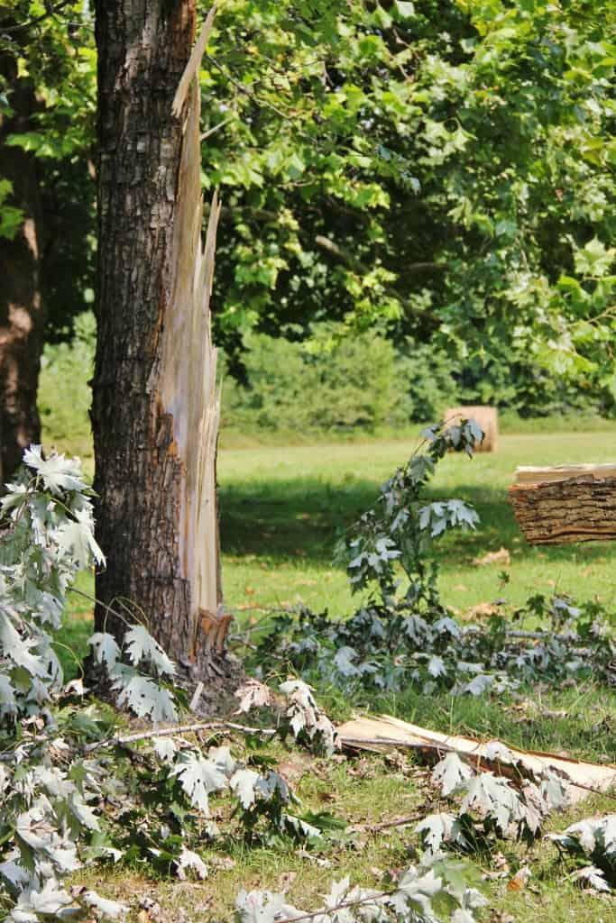 Fallen Tree in Back Yard