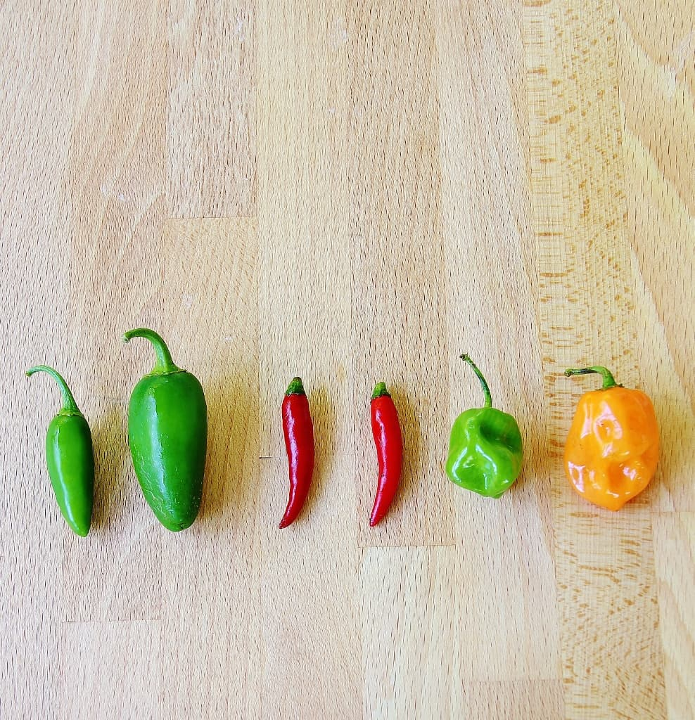 thistlewood peppers