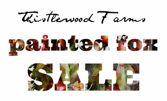 thistlewood farms painted fox sale