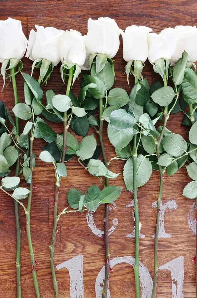 white rose stems