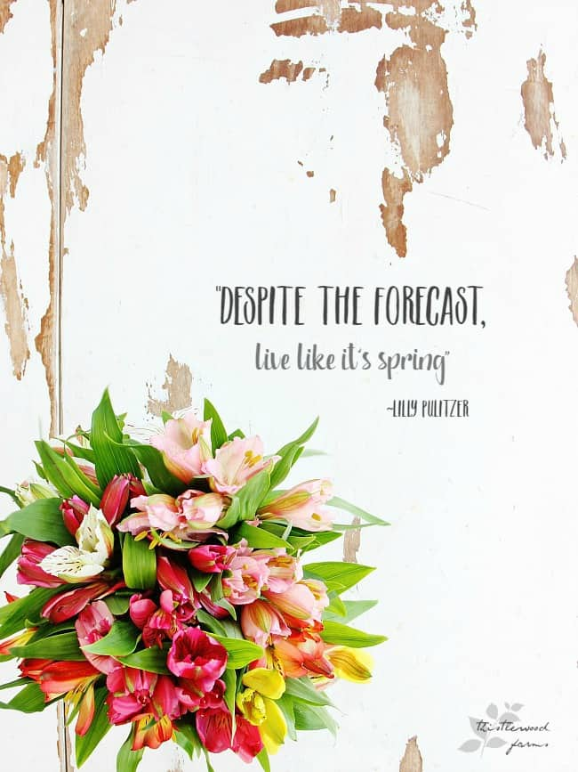 despite the forecast, live like it's spring