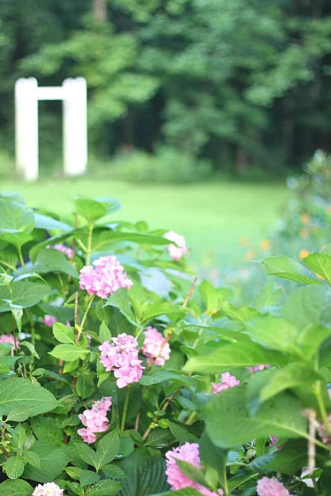 how to decorate with hydrangeas from a farmhouse garden