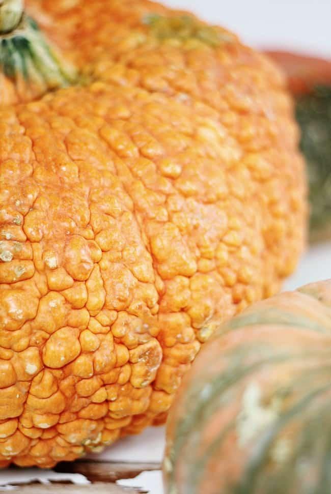 pumpkin-texture