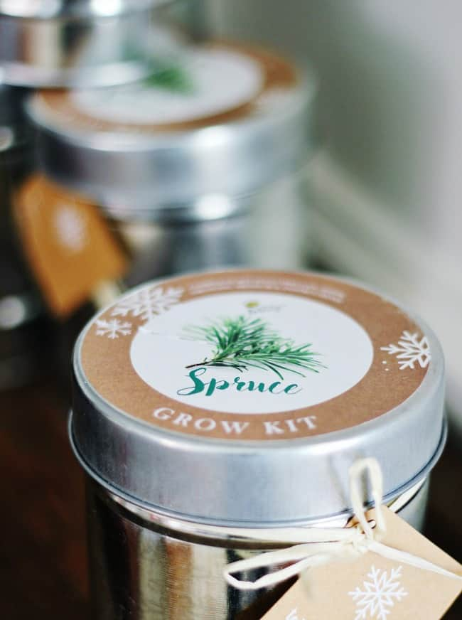 spruce-grow-kit-christmas