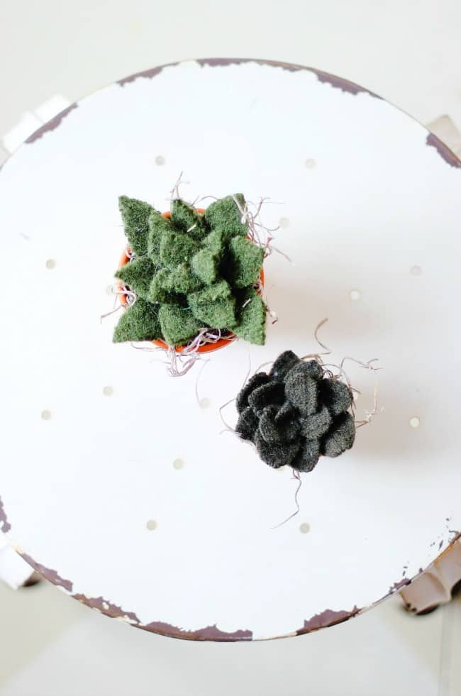 felted-succulents
