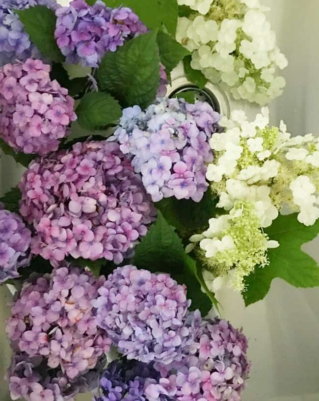 hydrangeas in laundry room sink and how to decorate with hydrangeas