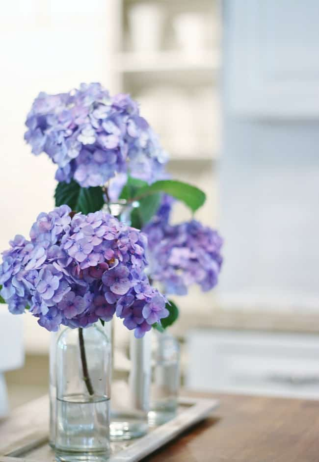 Hydrangeas in glass bottles