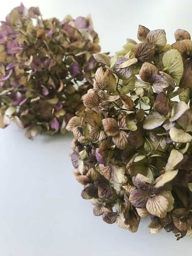 How To Decorate With Hydrangeas Thistlewood Farm