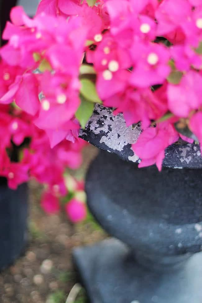 outdoor garden decor ideas planter